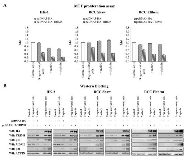 TRIM8 up-regulation restores p53 tumour suppressor response to chemotherapeutic drug treatments in renal cell carcinoma.