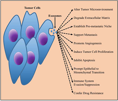 The biological function of TEXs in tumorigenesis.