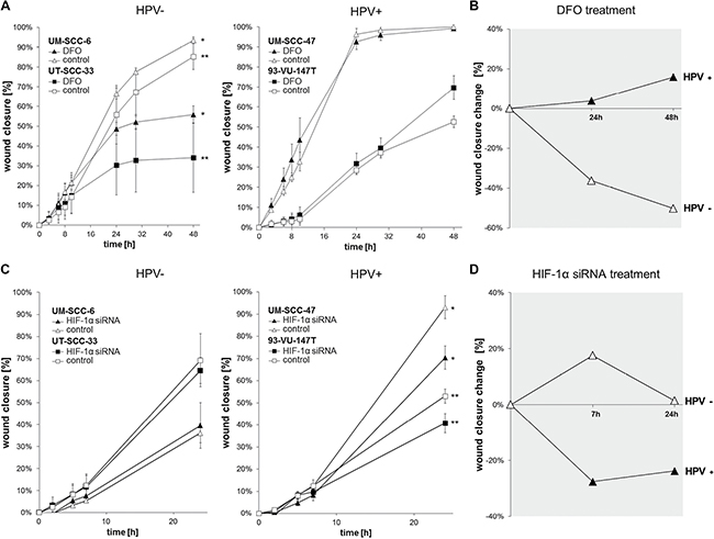 Chemically induced hypoxia impairs the migration of HPV-negative while HPV-positive cell lines are influenced via HIF-1α inhibition by siRNA.