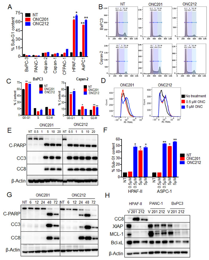 ONC212 induces apoptosis at lower doses and at earlier time point than ONC201 in sensitive cell lines.