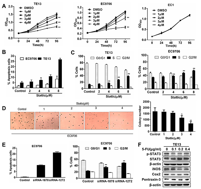 Constitutively activated STAT3 is required for the growth and survival of esophageal squamous cancer cells.