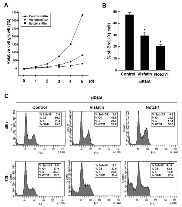 Effects of visfatin or Notch1 depletion on cell proliferation and apoptosis.