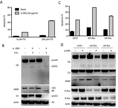 Inhibition of H-Ras renders TRAIL-resistant cells susceptible to anti-DR5 antibody.