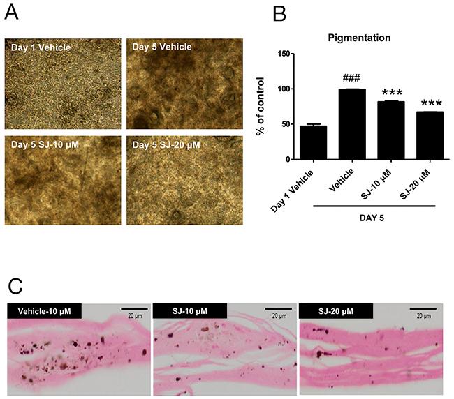 Swertiajaponin suppresses melanin accumulation in a human skin model.