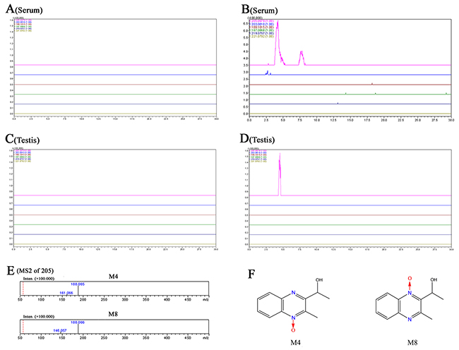 Accurate EICs of the prototype and metabolites of MEQ in the serum and testes of male mice by LC/MS-IT-TOF analysis.