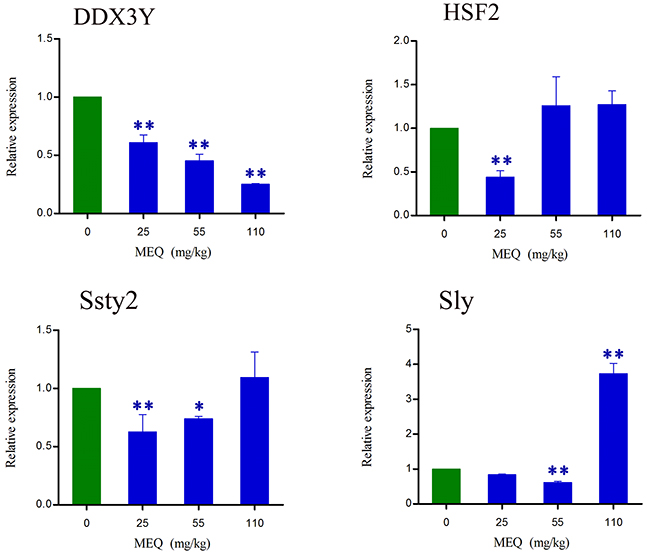 lterations in DDX3Y, HSF2, Ssty2, and Sly expression in mouse testis after the administration of MEQ for 18 months.