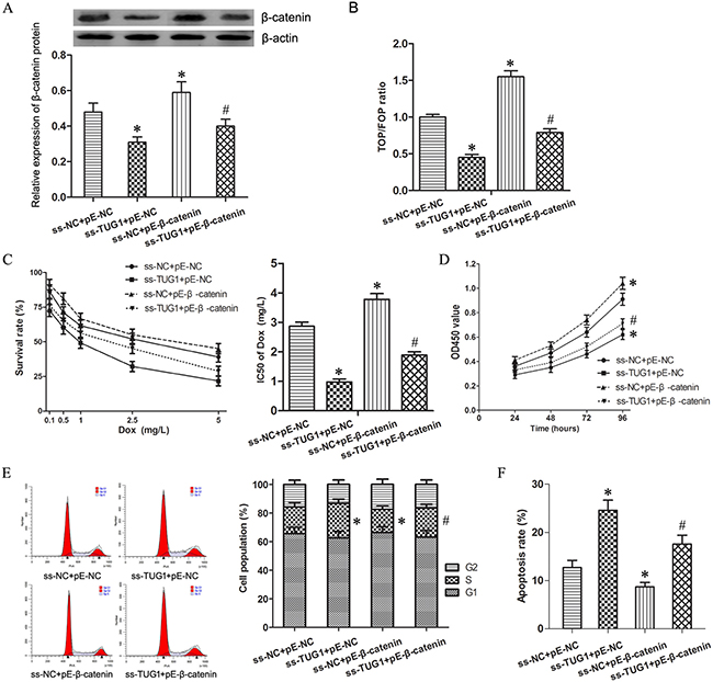 Wnt/β-catenin pathway mediated TUG1-induced effecting on Dox resistance in 24/Dox cells.