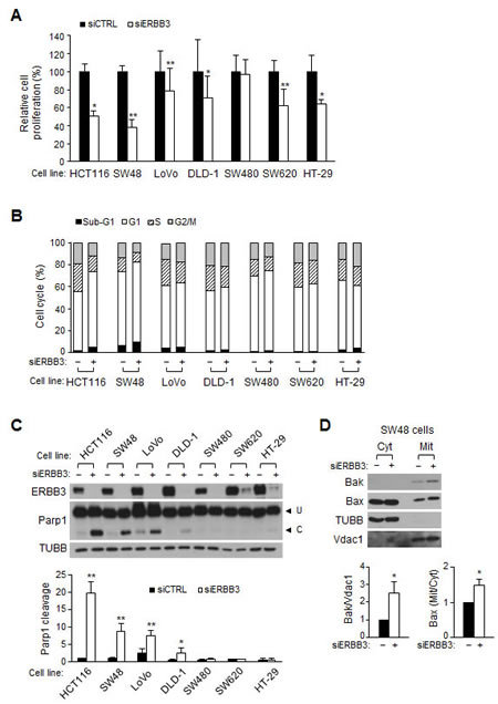 The ERBB3 knockdown-induced apoptosis and cell cycle arrest in human colon cancer cells.