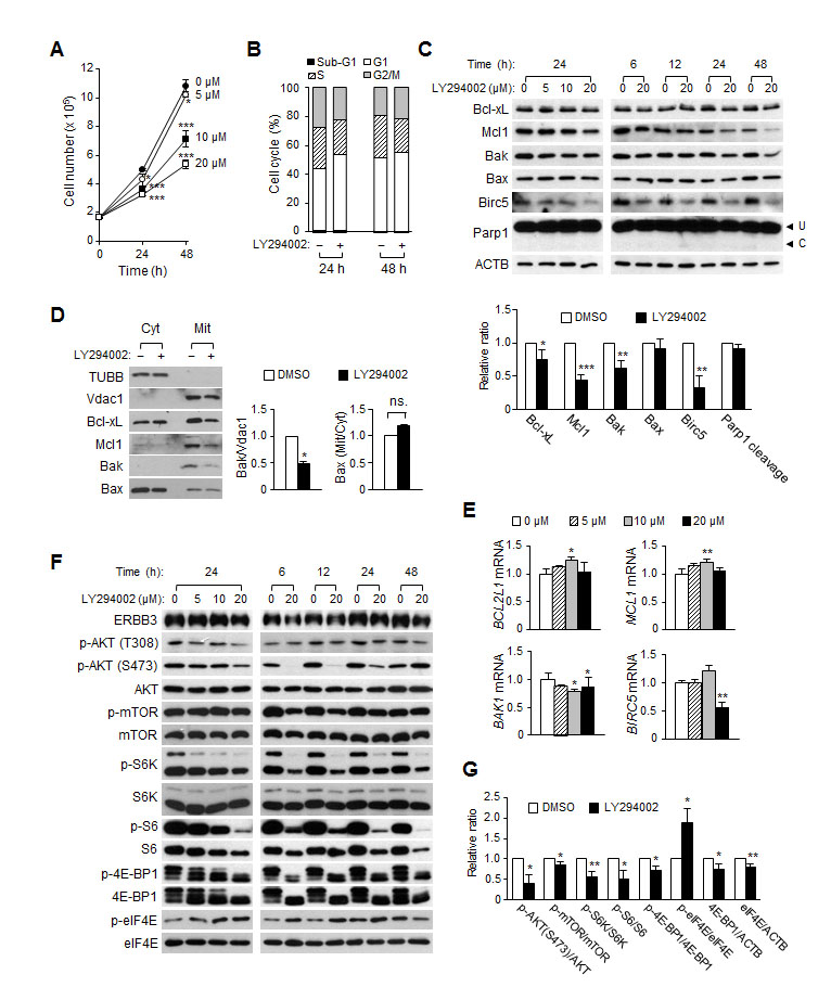 The effect of LY294002 on cell proliferation, cell cycles and apoptosis in HCT116 cells.