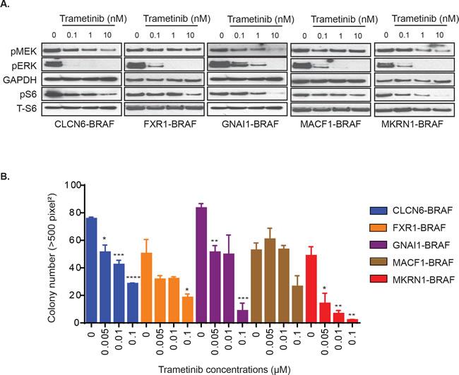 Varied effects of MEKi trametinib on various