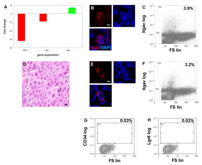 A new tumor initiating cell population with limited differentiation capacity from SCCs with EMT phenotype.
