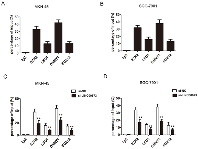 EZH2 and DNMT1 bound to promoter region of KLF4 in GC cells.