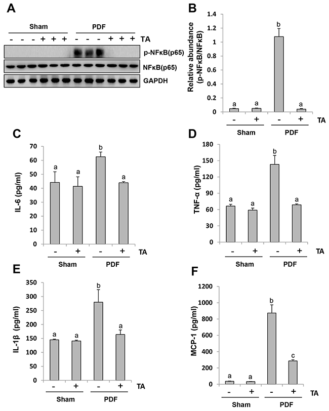 Inhibition of HDAC6 blocks activation of NF-κB signaling pathway and suppresses release of multiple inflammatory cytokines and chemokines.