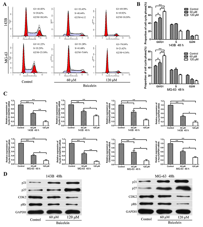 Baicalein induces G1 phase arrest of osteosarcoma cells.