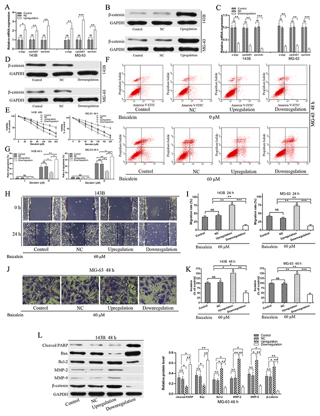 Upregulation of Wnt/β-catenin signaling pathway relieves the viability and apoptosis, and enhanced migration and invasion effects of baicalein in osteosarcoma cells.