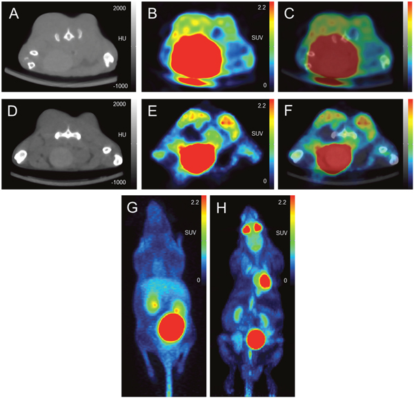 Image example: comparison of [68Ga]Pentixafor and [18F]FDG PET/CT in subcutaneous tumors (PC-3 cell line implanted in both flanks of a NMRI (nu/nu) mouse).