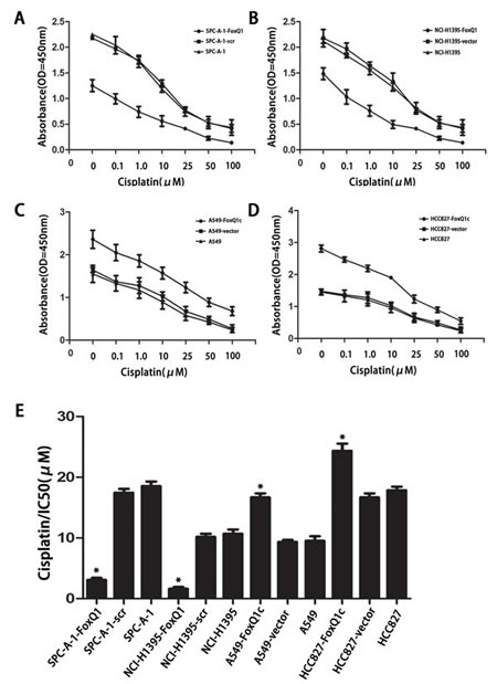 FoxQ1 overexpression confers resistance to chemotherapy-induced apoptosis.