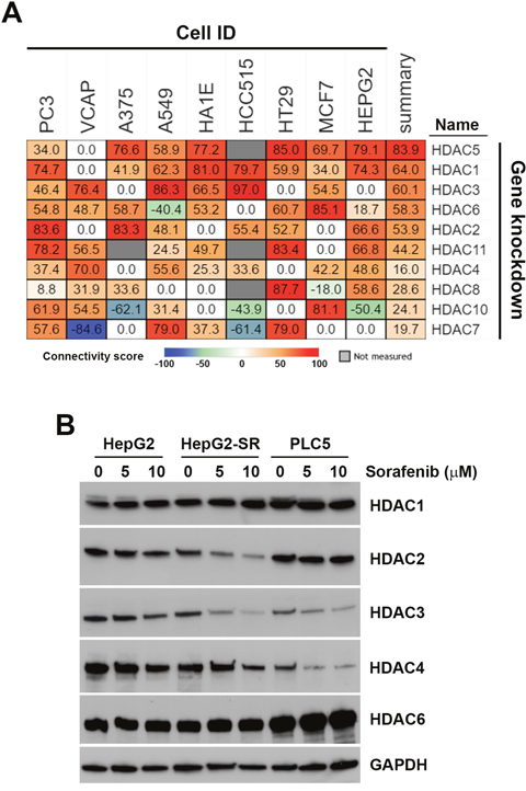 Connectivity analysis of sorafenib with each histone deacetylase (HDAC) isoform.