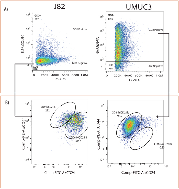 GD2 identifies CD44hiCD24lo in bladder cancer cells.