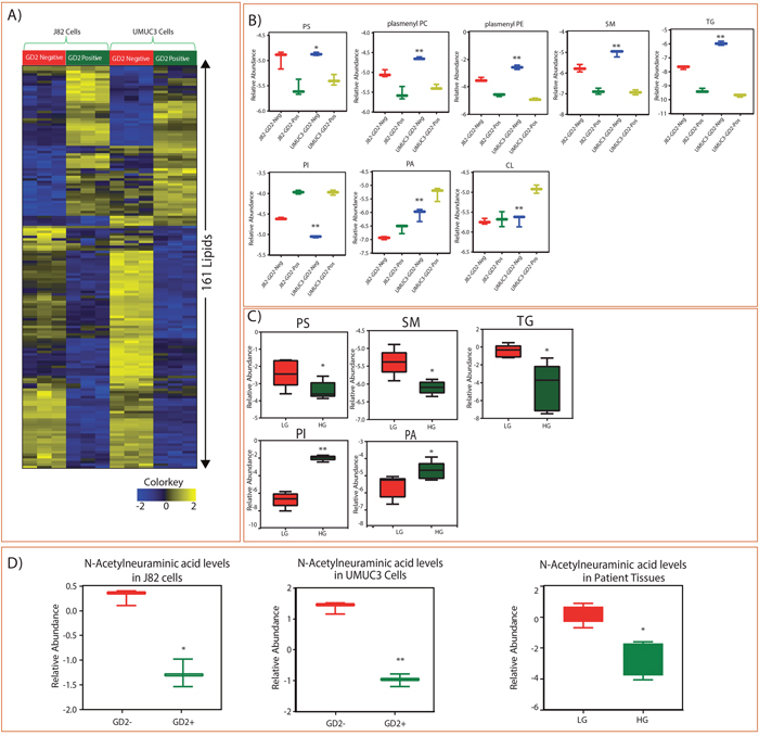 Identified lipid class alterations in GD2 +/- BLCA cell lines (J82 and UMUC3) and BLCA tissues.