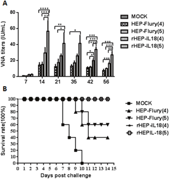 VNA titers and protection of rHEP-IL18 in mice.