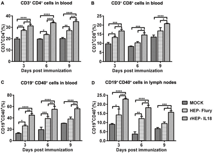 Recruitment and/or activation of T and B cells in blood and lymph nodes after rHEP-IL18 infection.