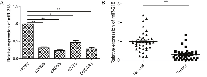 miR-218 expression was downregulated in ovarian cancer cell lines and tissues.