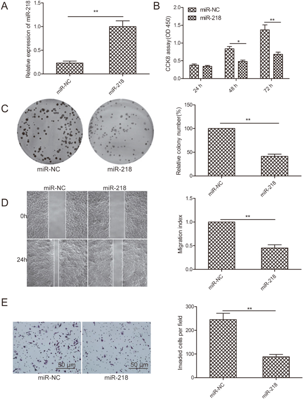 MiR-218 inhibits cell proliferation, colony formation, migration, and invasion of ovarian cancer cells.