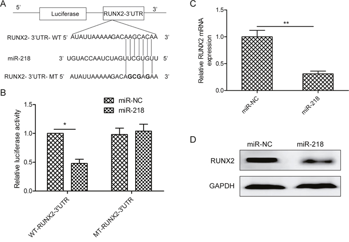 MiR-218 targets RUNX2 in ovarian cancer cells.