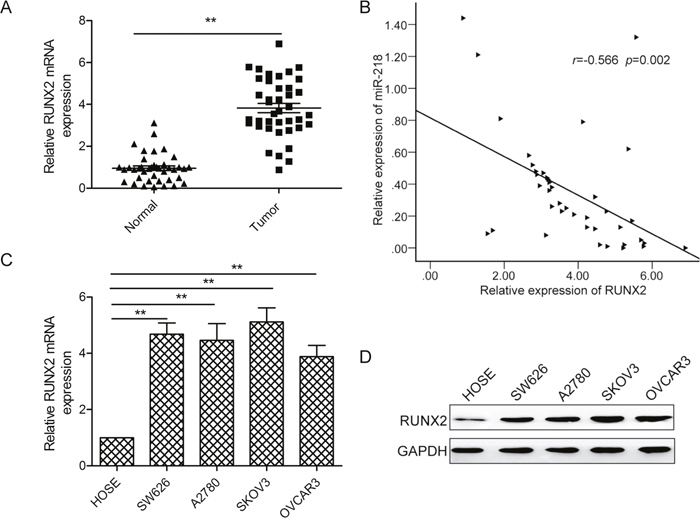 RUNX2 expressionis upregulated and inversely correlated with miR-218 expression in ovarian cancer tissues.