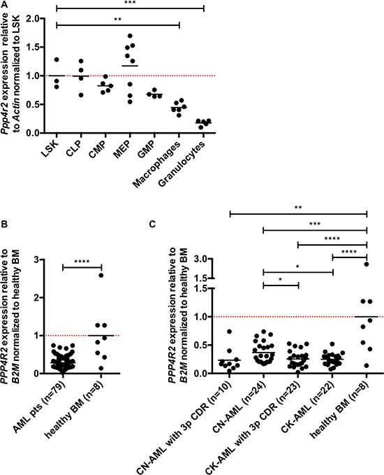 Ppp4r2 is differentially expressed in hematopoiesis and neoplasia.