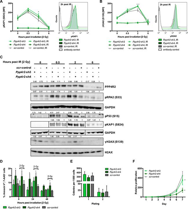 Ppp4r2 loss-of-function enhances DNA damage in murine leukemic bone marrow cells.