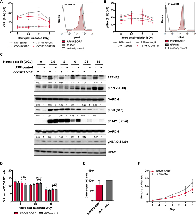 Re-expression of PPP4R2 restores DNA repair in leukemic cells with 3p microdeletion.