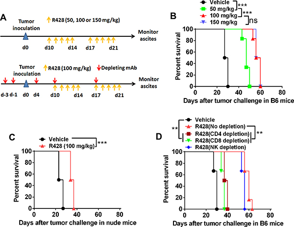 Targeting Axl inhibits tumor growth partially depending on the immune system.