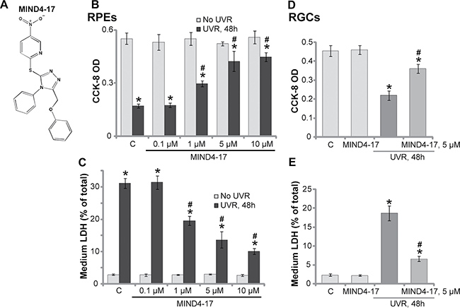 MIND4-17 protects retinal pigment epithelium (RPE) cells (RPEs) and retinal ganglion cells (RGCs) from UVR.