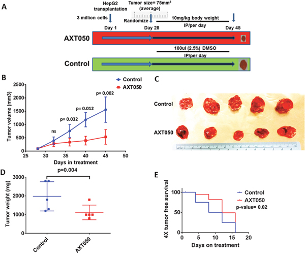 AXT050 treatment in vivo delayed tumor growth of subcutaneous HepG2 xenografts.