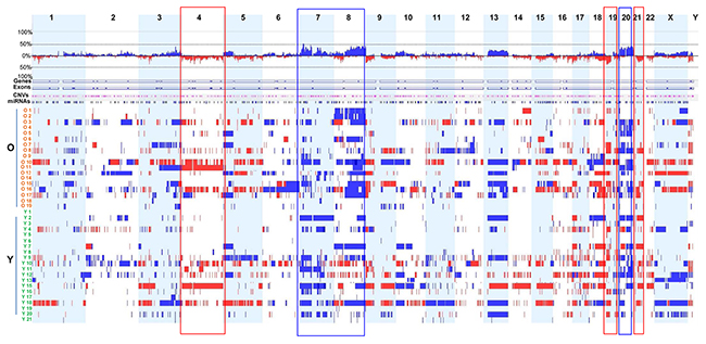Genome-wide DNA CNAs across 38 GC samples.