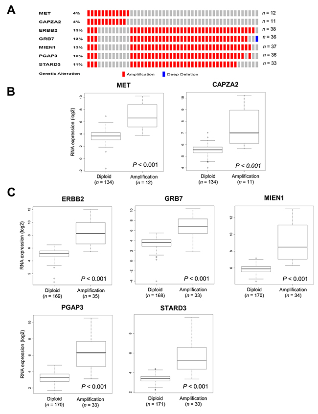 Validation of CNAs and gene expression of genes co-amplified with MET or ERBB2 in TCGA data.