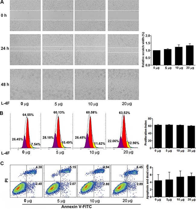 L-4F could not directly attenuate H7 cell invasion or proliferation and did not induce apoptosis.