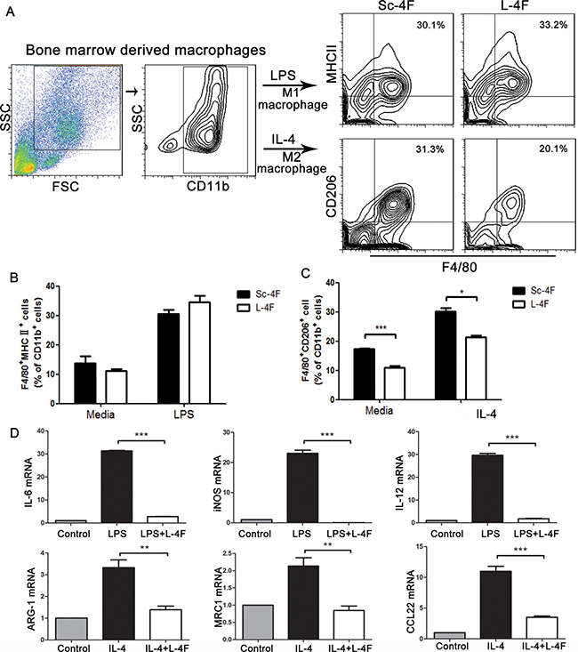L-4F inhibits M2 macrophage polarization and decreases the expression of macrophage-associated genes.