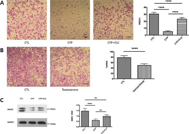 CYP11A1 overexpression compromise trophoblast invasion and inhibit MMP-2 expression.