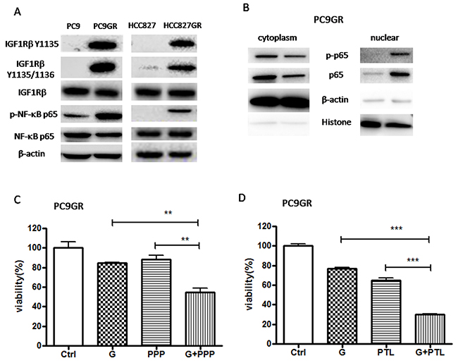 IGF1R/NF-κB p65 signaling was activated in GR cells and inhibition of IGF1R/NF-κB p65 increased the sensitivity of GR cells to gefitinib.