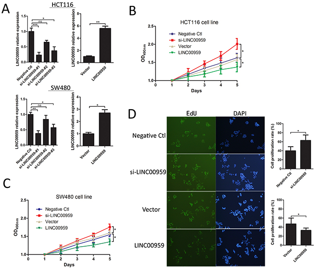LINC00959 effects on colon cancer cell proliferation.