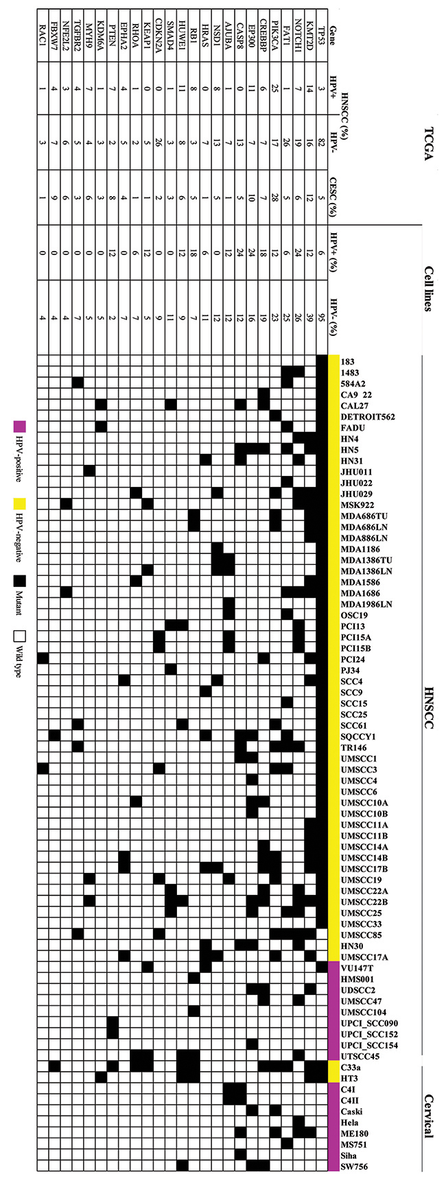 HNSCC and CESC cell lines have mutation frequencies similar to those in patient tumors.