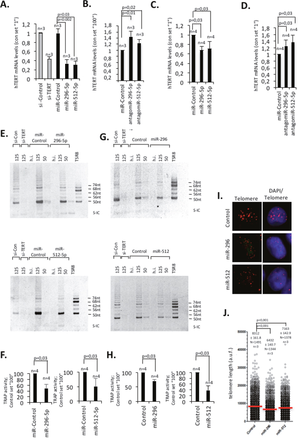 miR-296-5p and miR-512-5p act as negative regulators of telomerase activity and telomere length by targeting hTERT expression.