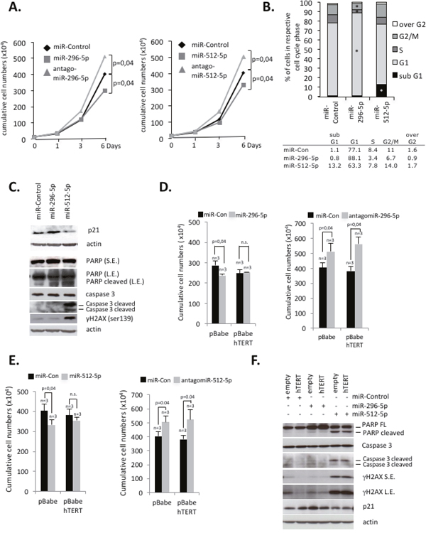 miR-296-5p and miR-512-5p suppress hTERT-mediated protection from apoptosis and senescence in basal type breast cancer cells.