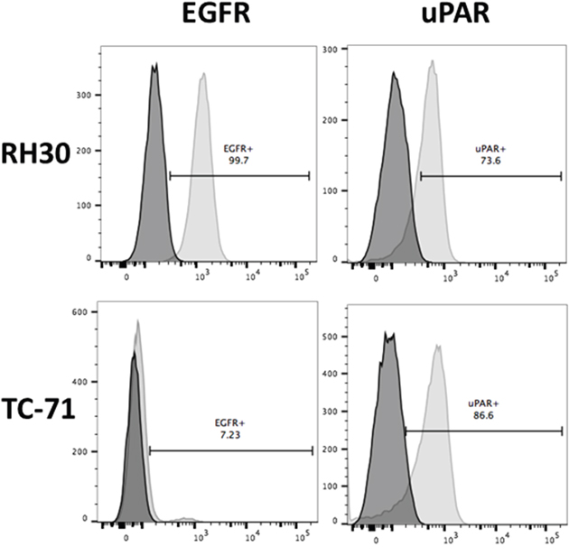 Surface expression of EGFR and uPAR on RH30 (RMS) and TC-71 (EWS) cell lines by flow cytometry.