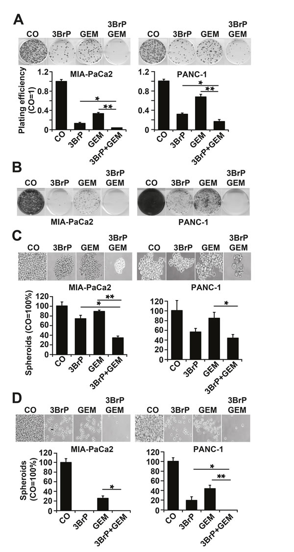 3BrP inhibits colony and spheroid formation.