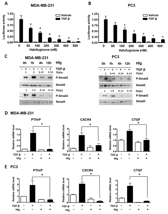 Halofuginone inhibits TGF-β signaling in MDA-MB-231 and PC3 cancer cells.