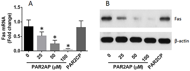 PAR2 suppresses Fas expression in lung cells.